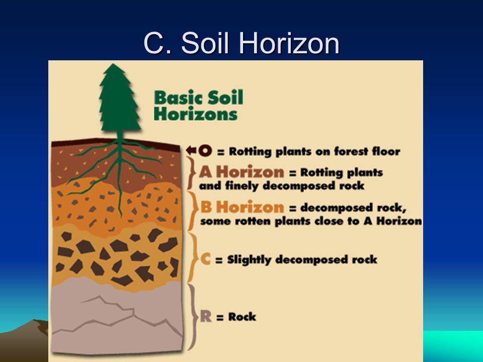 C. Soil Horizon