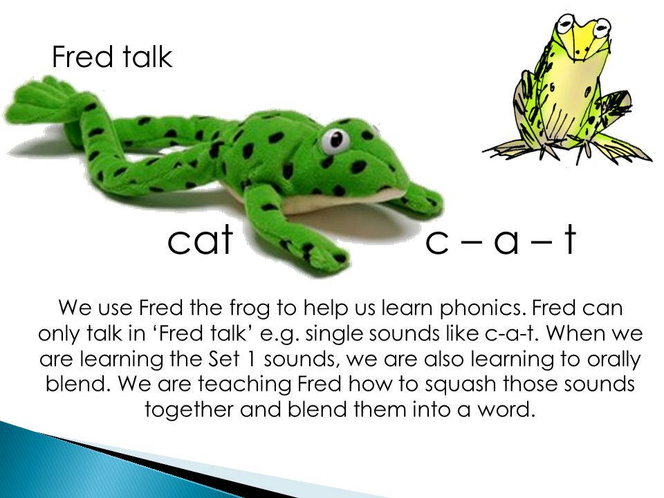 Fred talk cat c – a – t We use Fred the frog to help us learn phonics. Fred can only talk in 'Fred talk' e.g. single sounds like c-a-t. When we are le