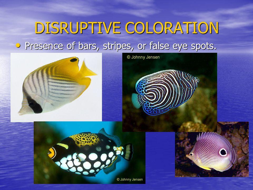 DISRUPTIVE COLORATION Presence of bars, stripes, or false eye spots.
