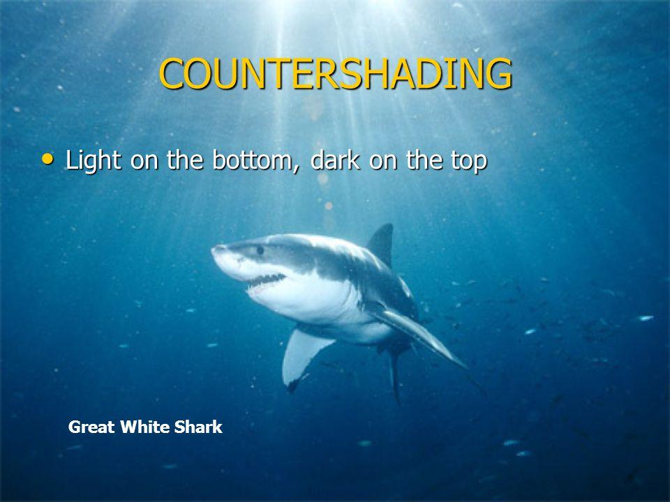 COUNTERSHADING Light on the bottom, dark on the top Light on the bottom, dark on the top Great White Shark