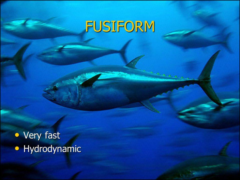 FUSIFORM Very fast Very fast Hydrodynamic Hydrodynamic