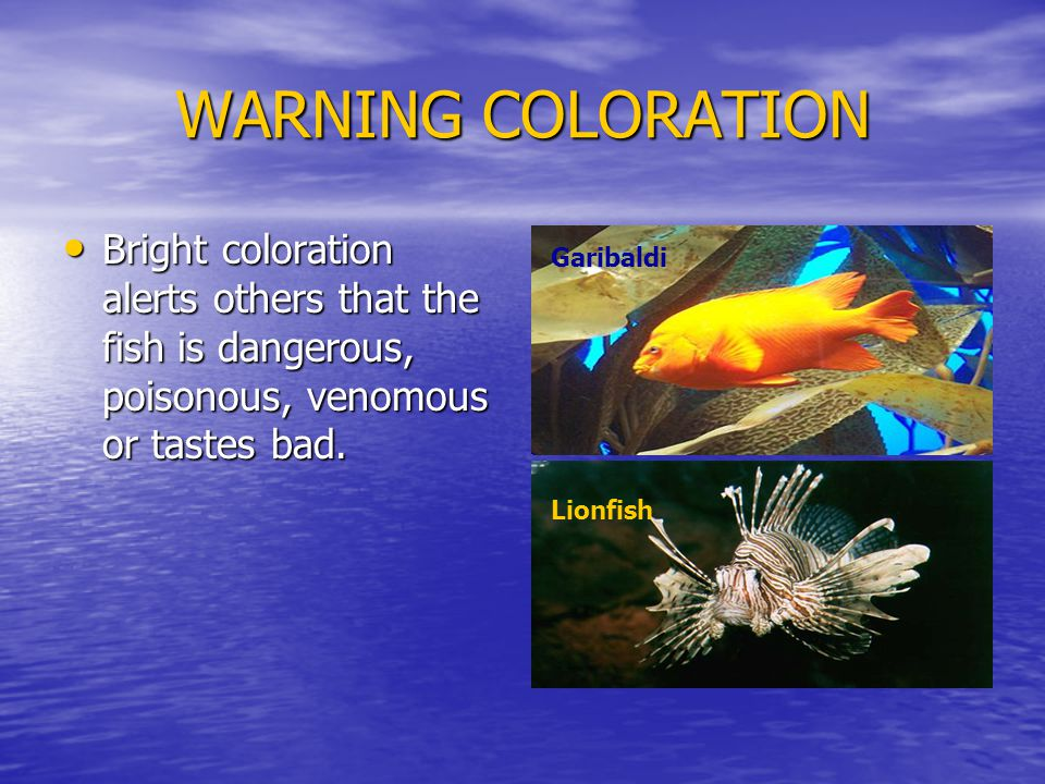 WARNING COLORATION Bright coloration alerts others that the fish is dangerous, poisonous, venomous or tastes bad.