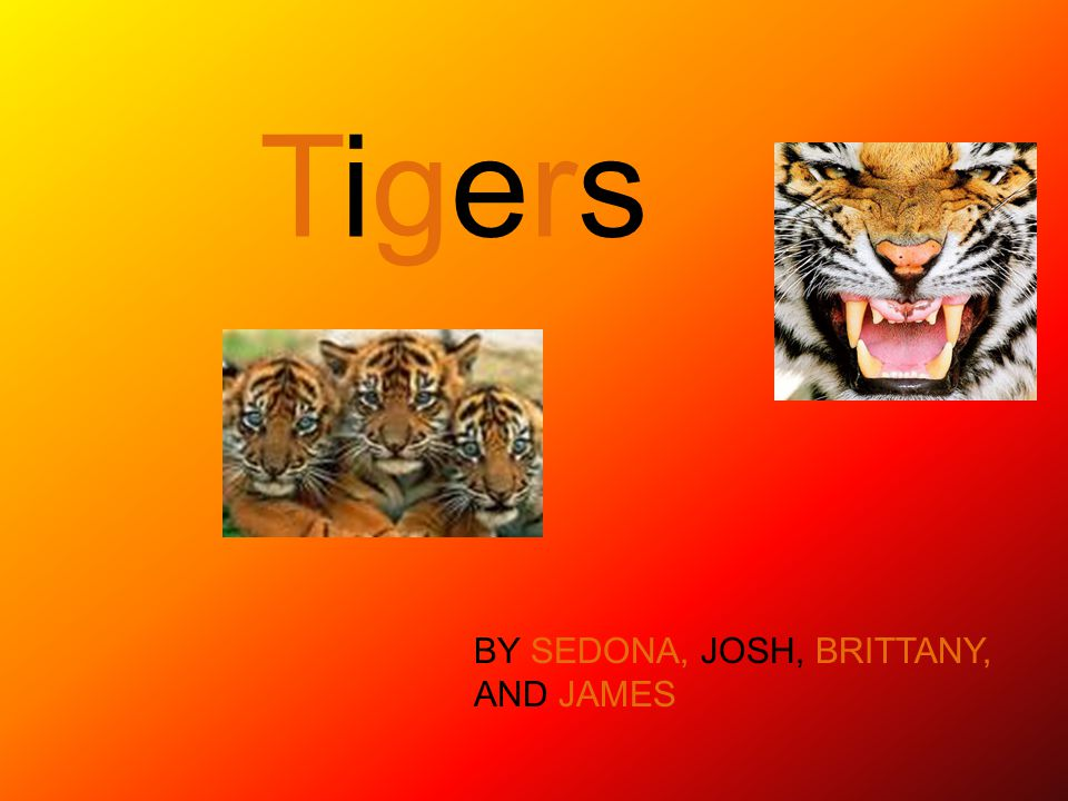 TIGERS PHYSICAL FEATURES The tigers fur is a pattern of dark vertical stripes.