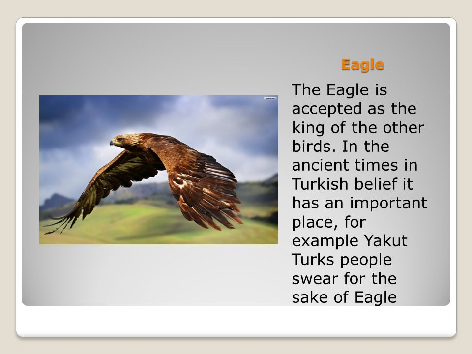 Eagle The Eagle is accepted as the king of the other birds. In the ancient times in Turkish belief it has an important place, for example Yakut Turks