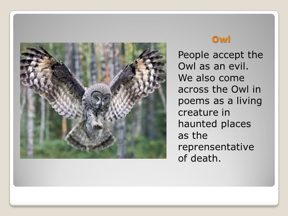 Owl People accept the Owl as an evil. We also come across the Owl in poems as a living creature in haunted places as the reprensentative of death.