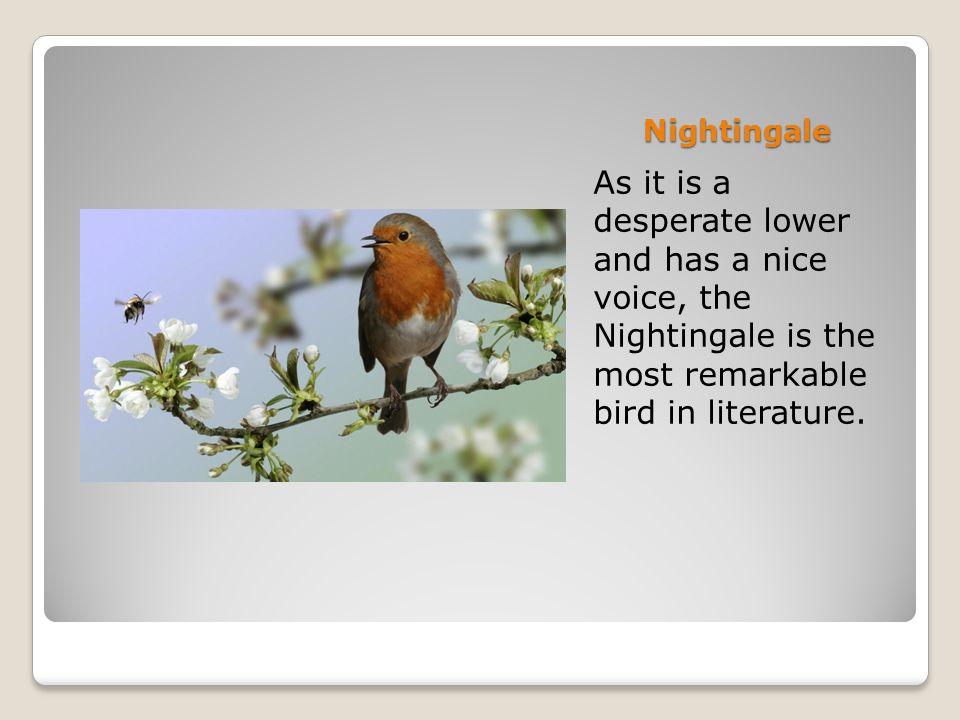 Nightingale As it is a desperate lower and has a nice voice, the Nightingale is the most remarkable bird in literature.