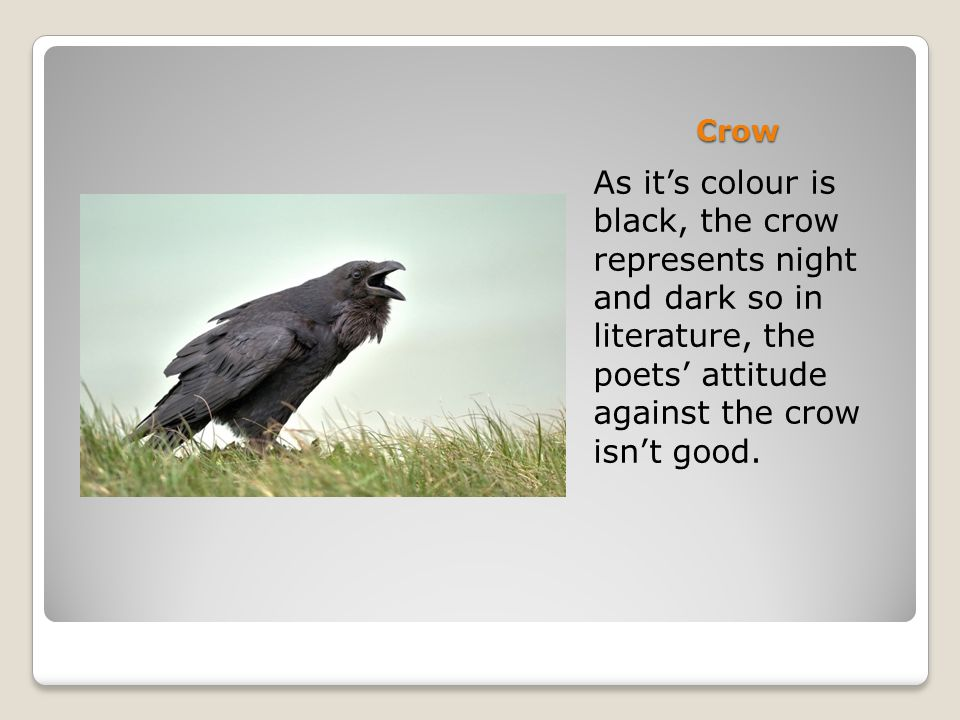 Crow As it's colour is black, the crow represents night and dark so in literature, the poets' attitude against the crow isn't good.