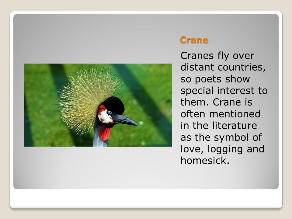 Crane Cranes fly over distant countries, so poets show special interest to them.