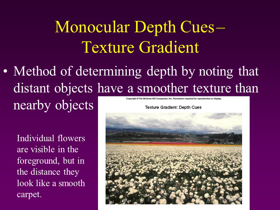 Monocular Depth Cues – Texture Gradient Method of determining depth by noting that distant objects have a smoother texture than nearby objects Individ