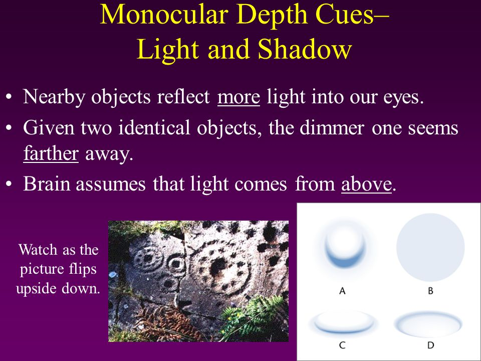 Monocular Depth Cues– Light and Shadow Nearby objects reflect more light into our eyes. Given two identical objects, the dimmer one seems farther away