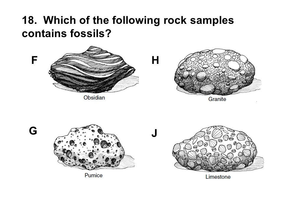 18. Which of the following rock samples contains fossils? F G H J