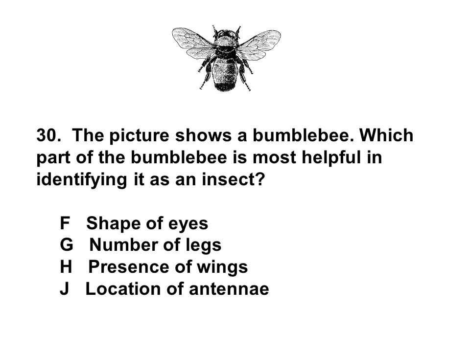 30. The picture shows a bumblebee. Which part of the bumblebee is most helpful in identifying it as an insect? F Shape of eyes G Number of legs H Pres