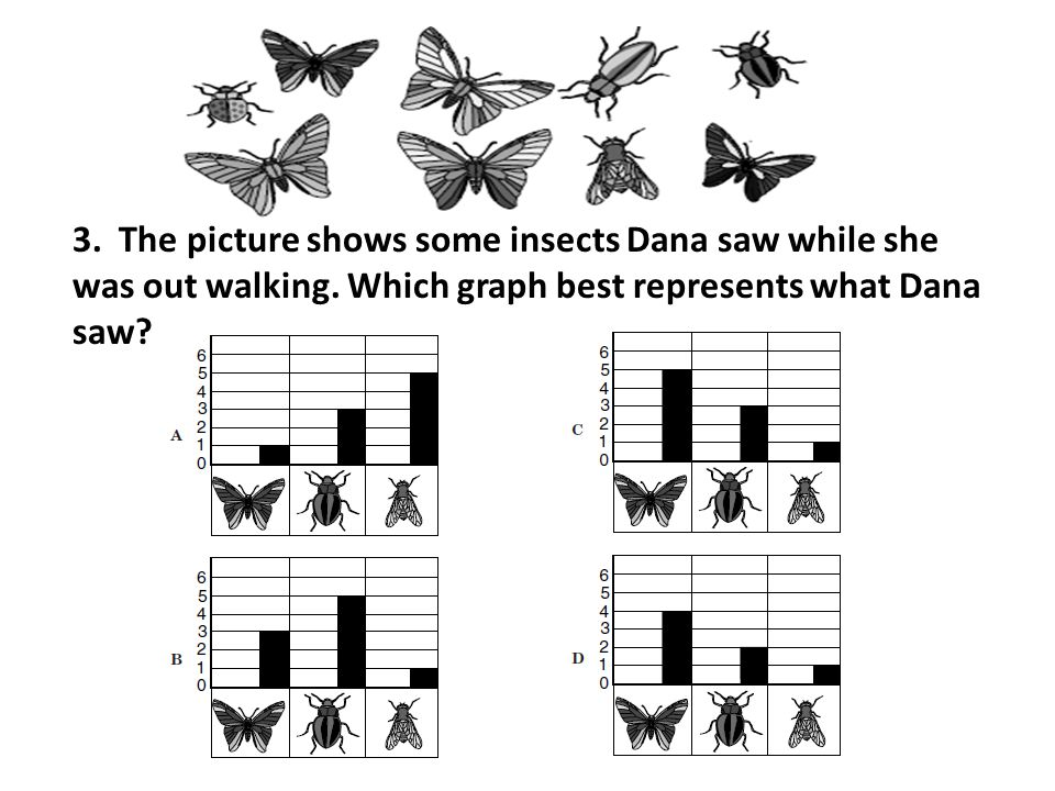 3. The picture shows some insects Dana saw while she was out walking. Which graph best represents what Dana saw?