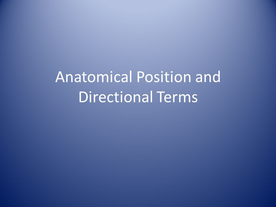 Anatomical Position (AP) AP is the reference position used to describe the location of anatomical parts and to describe and explain human movement.
