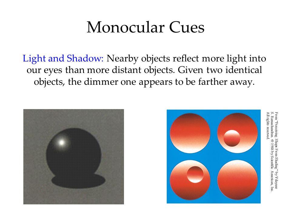 Monocular Cues Light and Shadow: Nearby objects reflect more light into our eyes than more distant objects.