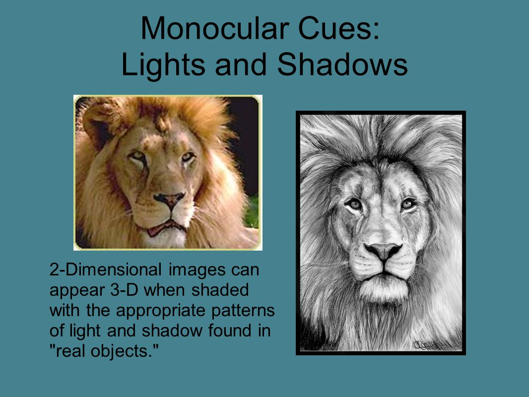 Monocular Cues: Lights and Shadows 2-Dimensional images can appear 3-D when shaded with the appropriate patterns of light and shadow found in