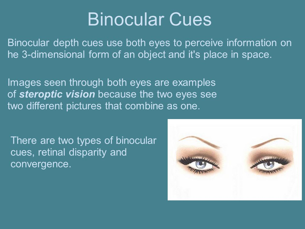 Binocular depth cues use both eyes to perceive information on he 3-dimensional form of an object and it's place in space. There are two types of binoc
