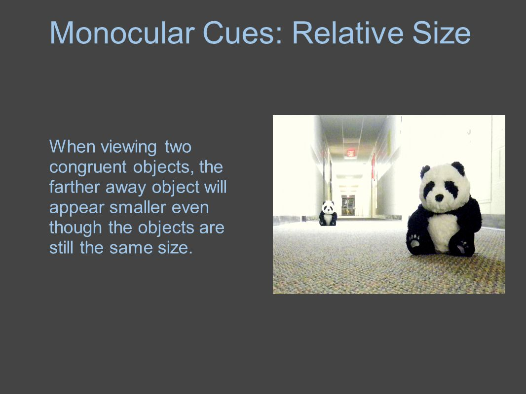 Monocular Cues: Relative Size When viewing two congruent objects, the farther away object will appear smaller even though the objects are still the sa