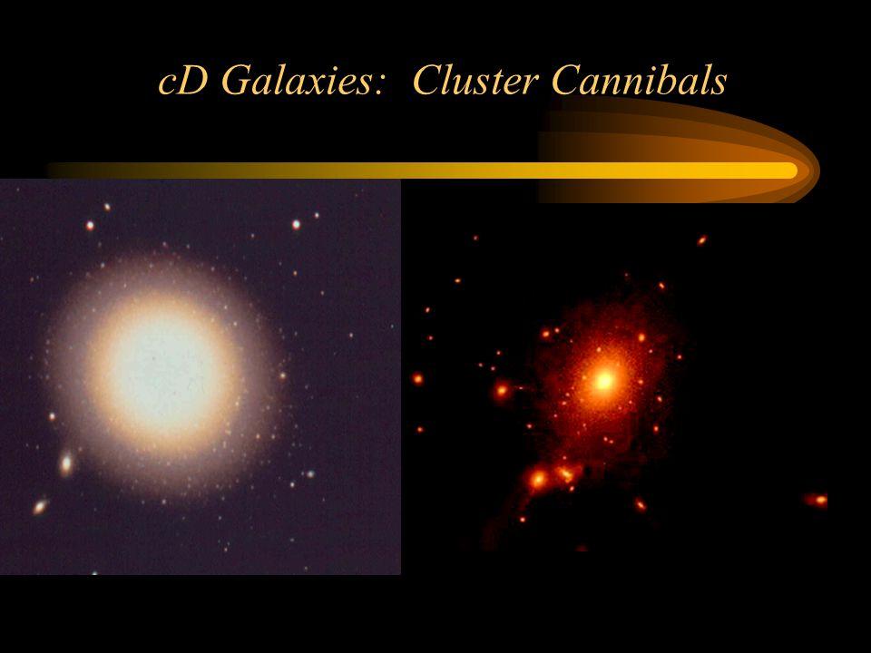 cD Galaxies: Cluster Cannibals