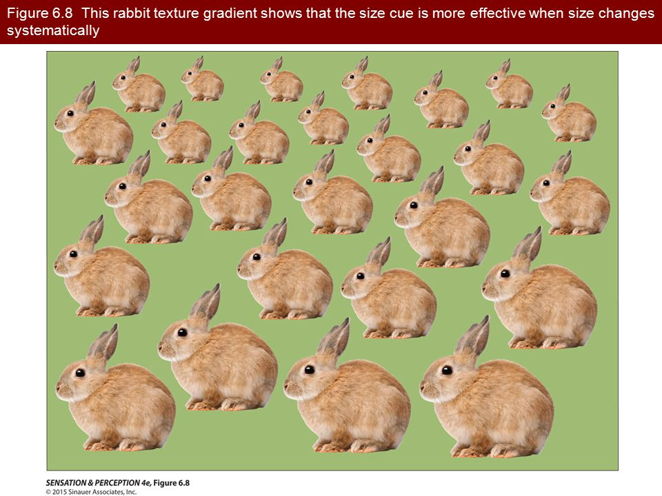 Figure 6.8 This rabbit texture gradient shows that the size cue is more effective when size changes systematically