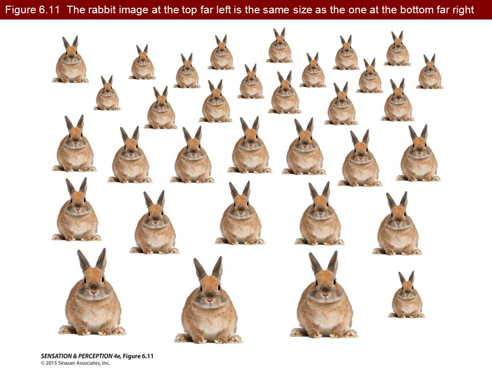 Figure 6.11 The rabbit image at the top far left is the same size as the one at the bottom far right