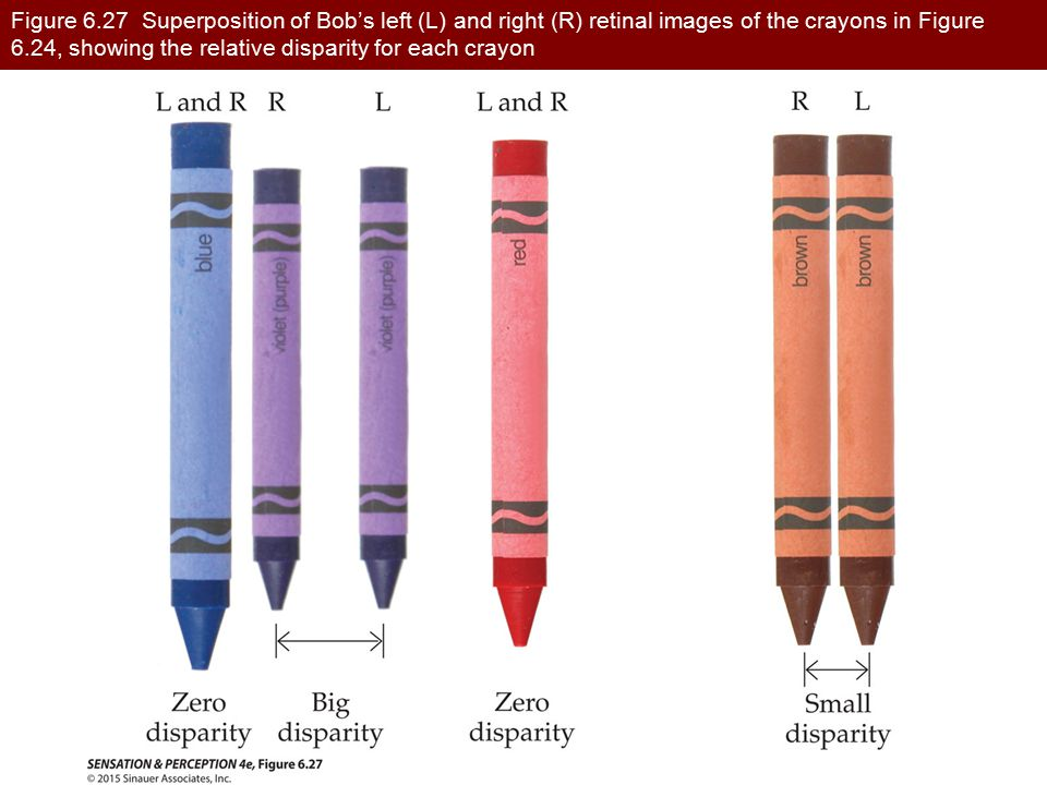 Figure 6.27 Superposition of Bob's left (L) and right (R) retinal images of the crayons in Figure 6.24, showing the relative disparity for each crayon