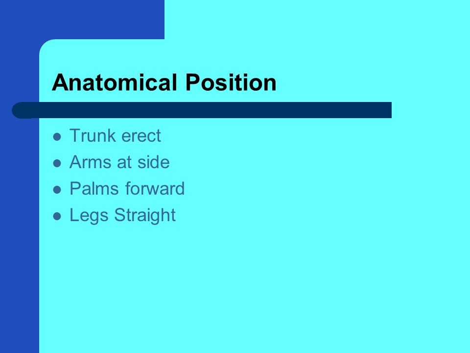 Anatomical Position Trunk erect Arms at side Palms forward Legs Straight