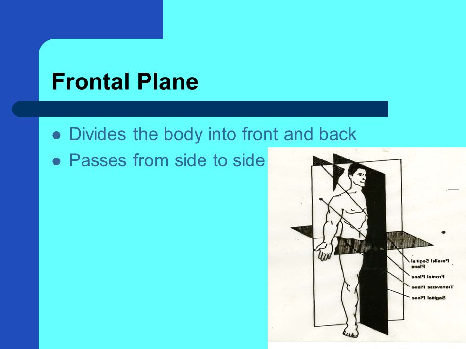 Frontal Plane Divides the body into front and back Passes from side to side
