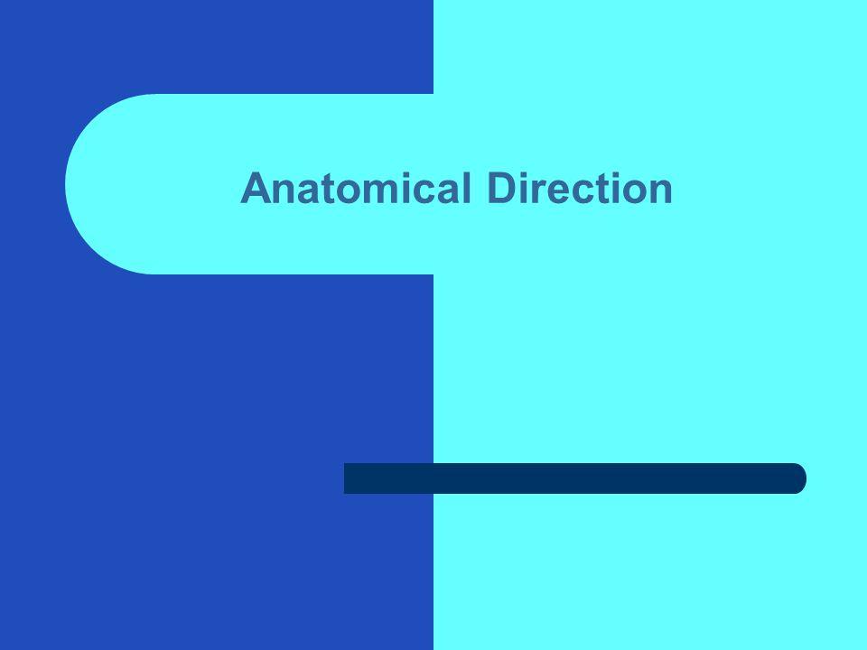 Anatomical Direction