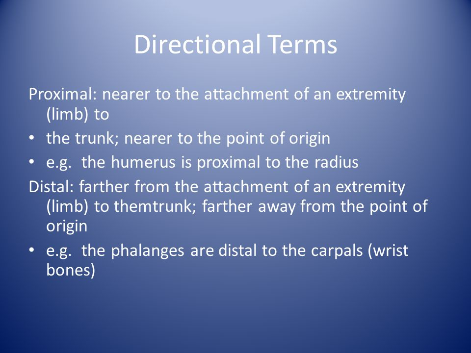 Directional Terms Proximal: nearer to the attachment of an extremity (limb) to the trunk; nearer to the point of origin e.g. the humerus is proximal t