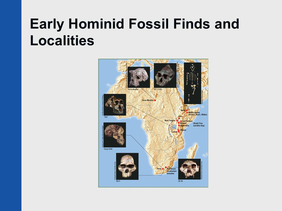 Early Hominid Fossil Finds and Localities