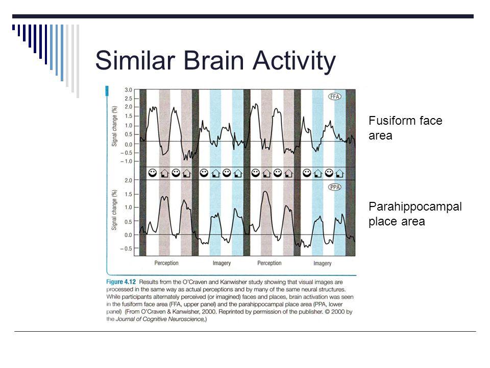 Similar Brain Activity Fusiform face area Parahippocampal place area