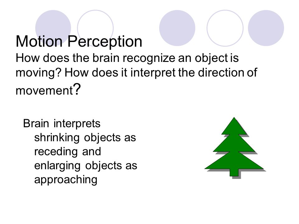 Motion Perception How does the brain recognize an object is moving? How does it interpret the direction of movement ? Brain interprets shrinking objec