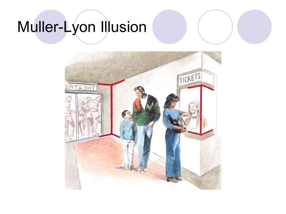 Muller-Lyon Illusion