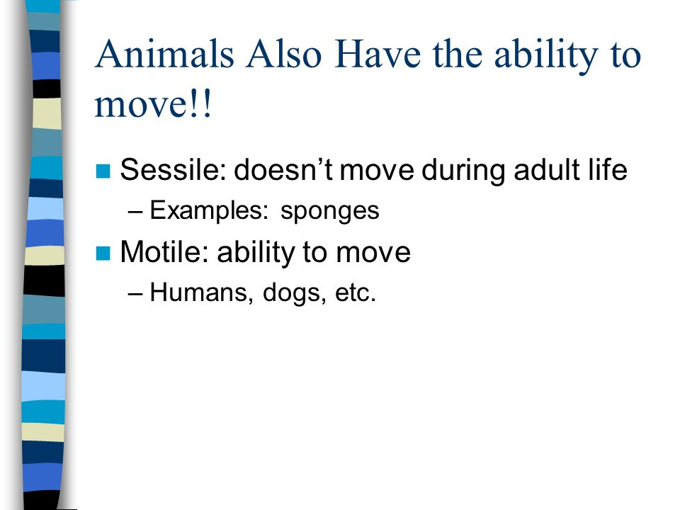 Animals Also Have the ability to move!.