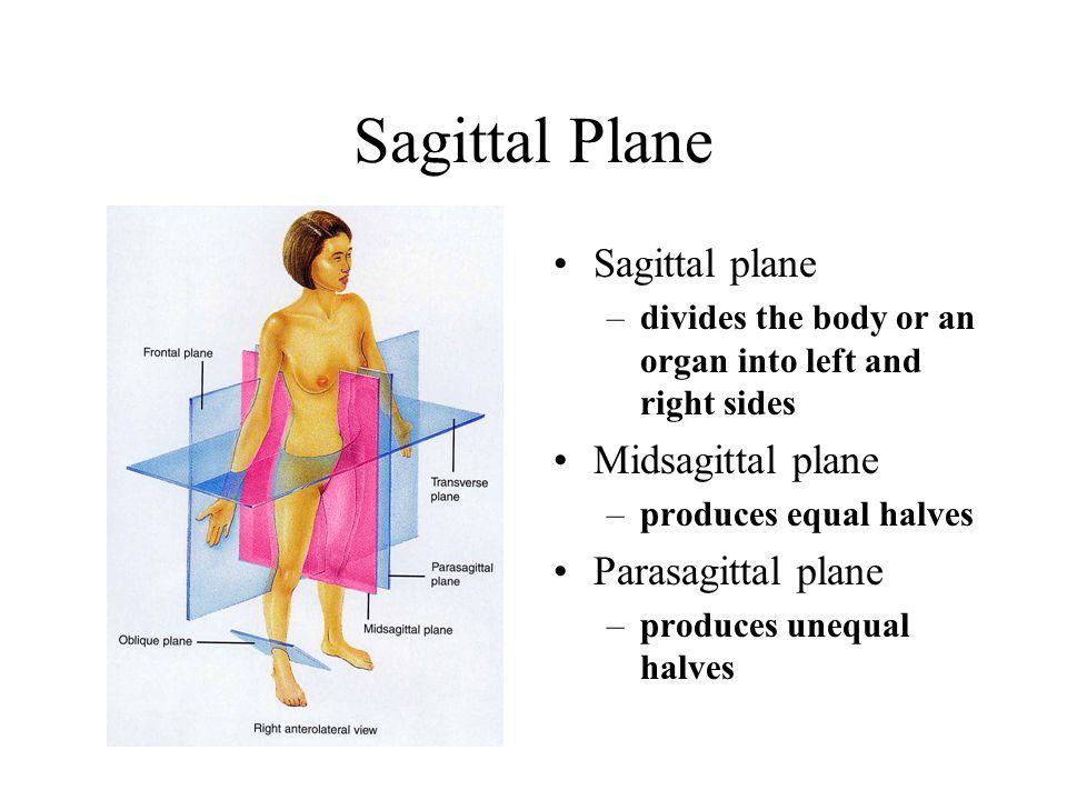Sagittal Plane Sagittal plane –divides the body or an organ into left and right sides Midsagittal plane –produces equal halves Parasagittal plane –produces unequal halves