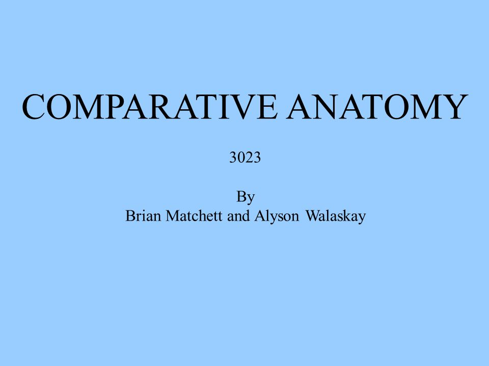 COMPARATIVE ANATOMY 3023 By Brian Matchett and Alyson Walaskay