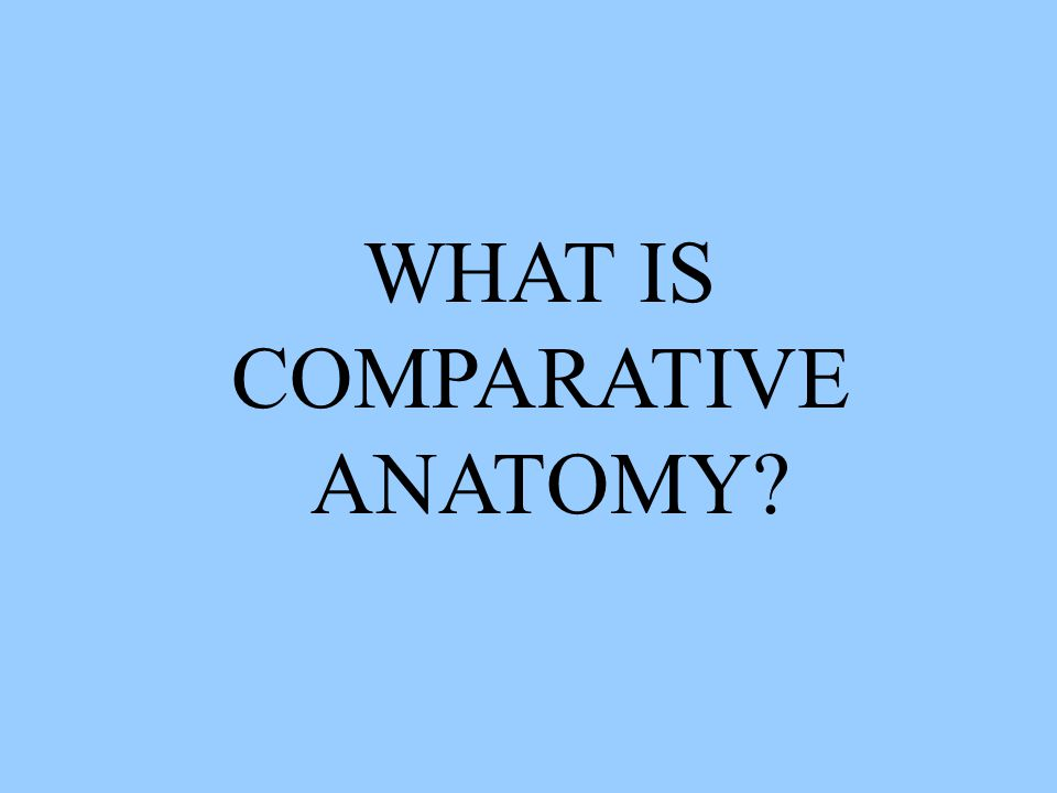 WHAT IS COMPARATIVE ANATOMY