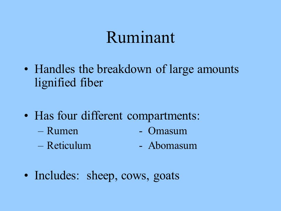 Ruminant Handles the breakdown of large amounts lignified fiber Has four different compartments: –Rumen - Omasum –Reticulum - Abomasum Includes: sheep, cows, goats