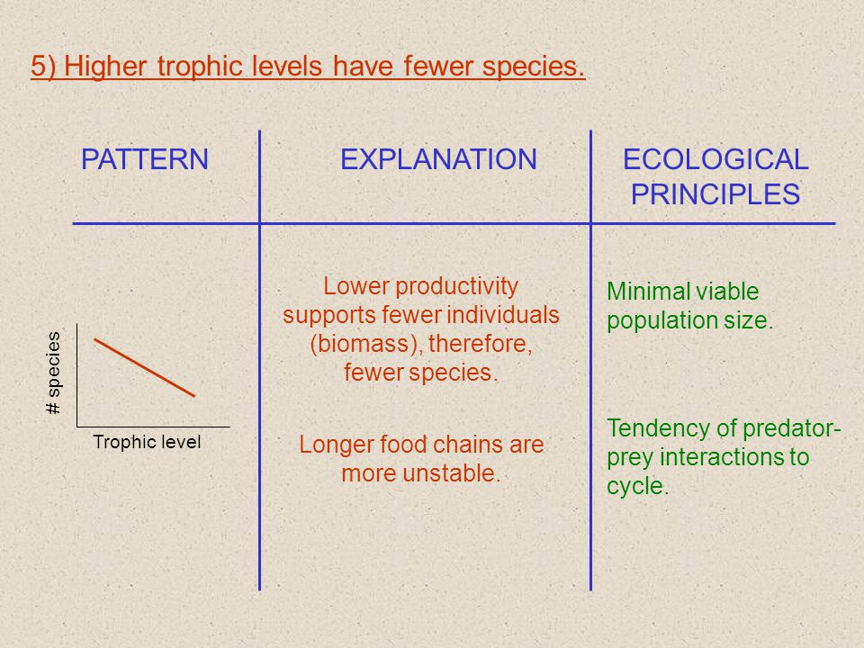 5) Higher trophic levels have fewer species.