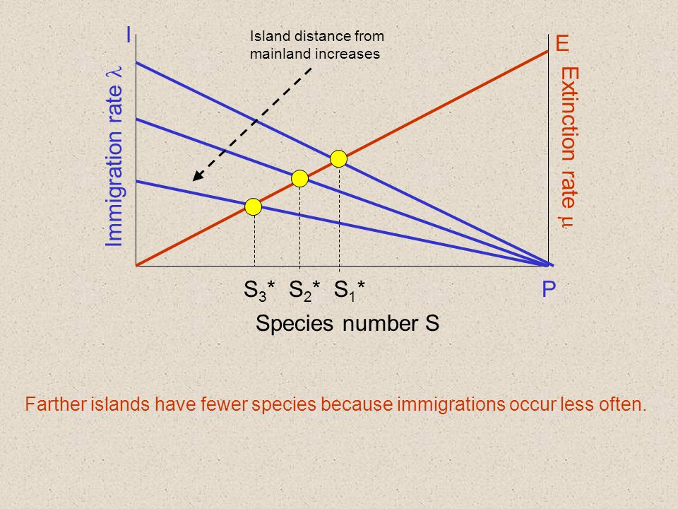 Immigration rate Extinction rate  Species number S I P E S1*S1* Farther islands have fewer species because immigrations occur less often.