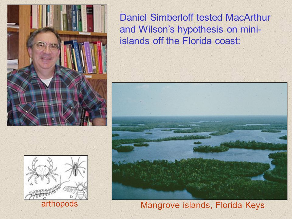 Mangrove islands, Florida Keys Daniel Simberloff tested MacArthur and Wilson's hypothesis on mini- islands off the Florida coast: arthopods