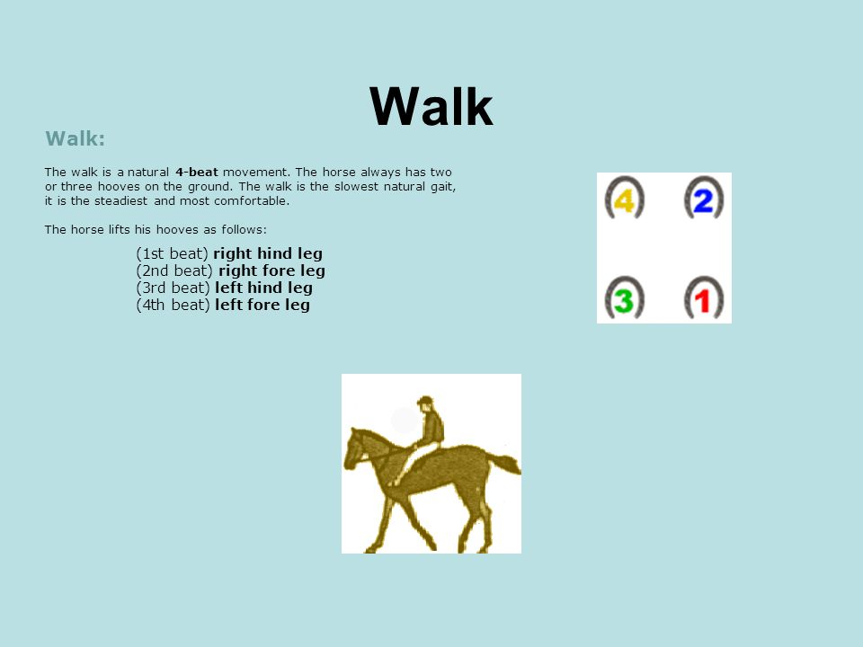 Walk Walk: The walk is a natural 4-beat movement. The horse always has two or three hooves on the ground. The walk is the slowest natural gait, it is