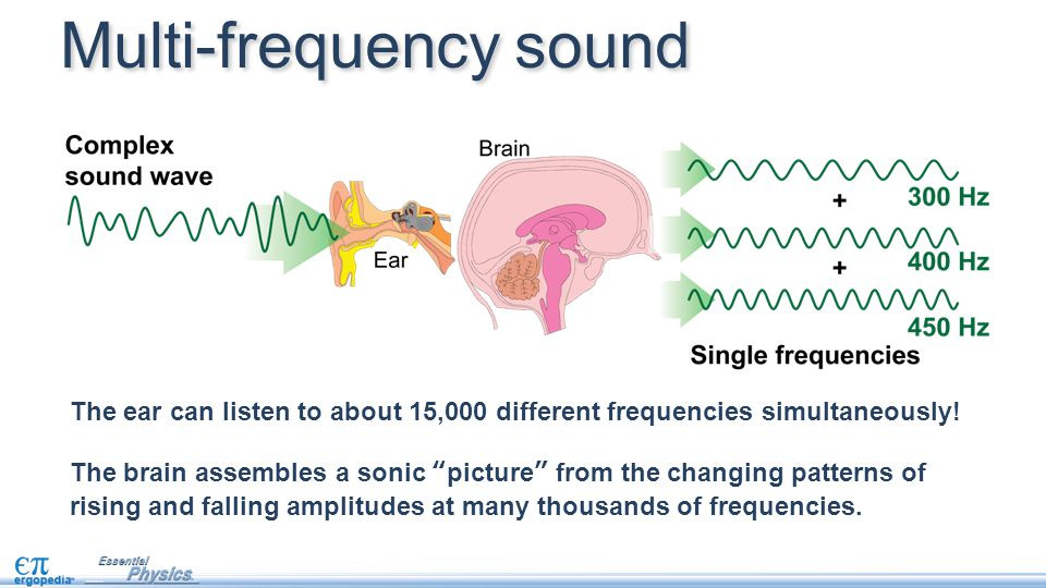 "The ear can listen to about 15,000 different frequencies simultaneously! The brain assembles a sonic ""picture"" from the changing patterns of rising an"