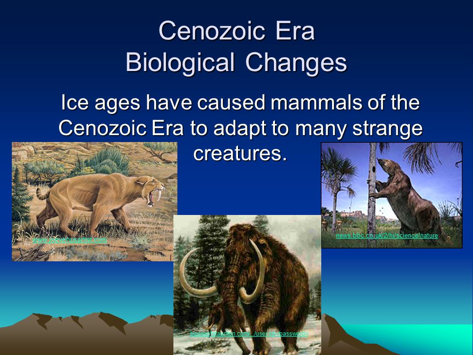 Ice ages have caused mammals of the Cenozoic Era to adapt to many strange creatures. Cenozoic Era Biological Changes www.joevenusartist.com news.bbc.c