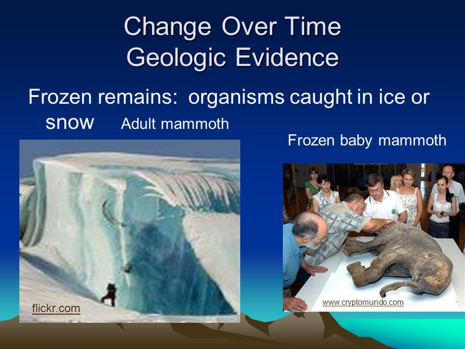 99 Mesozoic Era Hot and dry climate www.3drelax.com