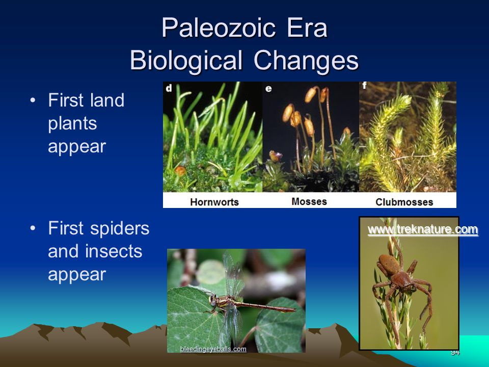 94 Paleozoic Era Biological Changes First land plants appear First spiders and insects appear www.msu.edu bleedingeyeballs.com www.treknature.com