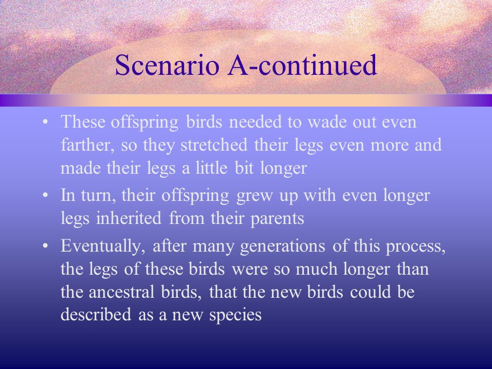Scenario B Within the species of ancestral short legged shorebirds there is a range of leg lengths from a bit shorter to a bit longer than the average leg length A change in the environment increases competition between the birds, depleting the food supply in the shallow water The birds with the slightly longer legs could wade out a little farther As a result, they obtained more food, lived a little longer, and therefore produced more offspring