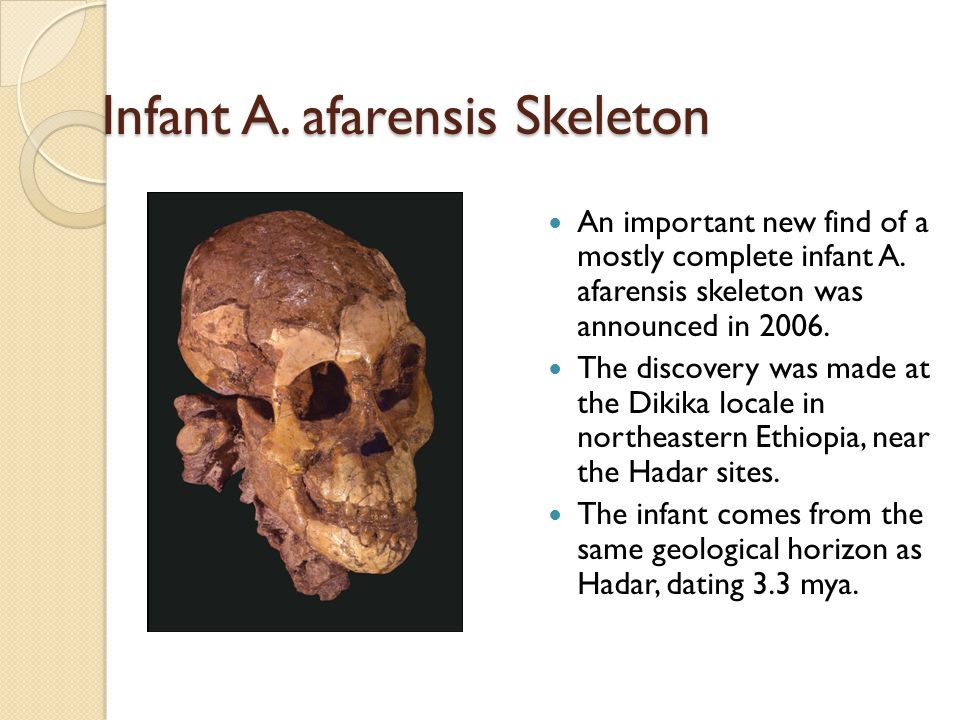 Infant A. afarensis Skeleton An important new find of a mostly complete infant A.