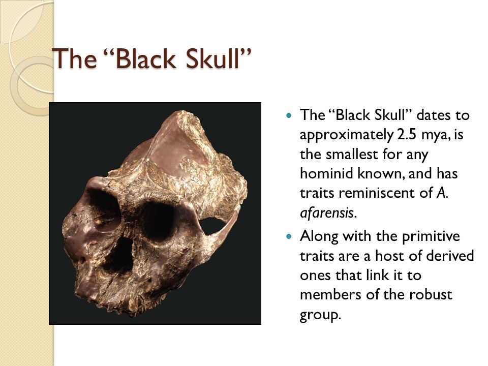 The Black Skull The Black Skull dates to approximately 2.5 mya, is the smallest for any hominid known, and has traits reminiscent of A.